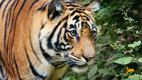 狂野之境:南亚